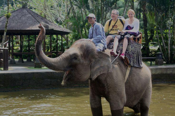 2013 on elephant